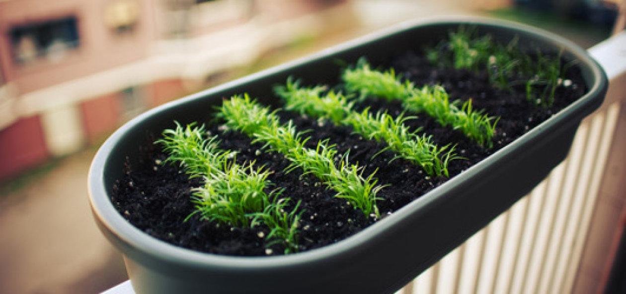 Tips&tricks za urbane vrtlare i sve one koji to žele postati