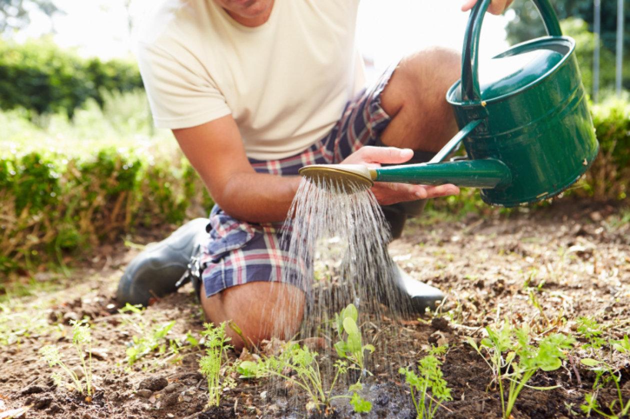Pravilno zalijevanje biljaka
