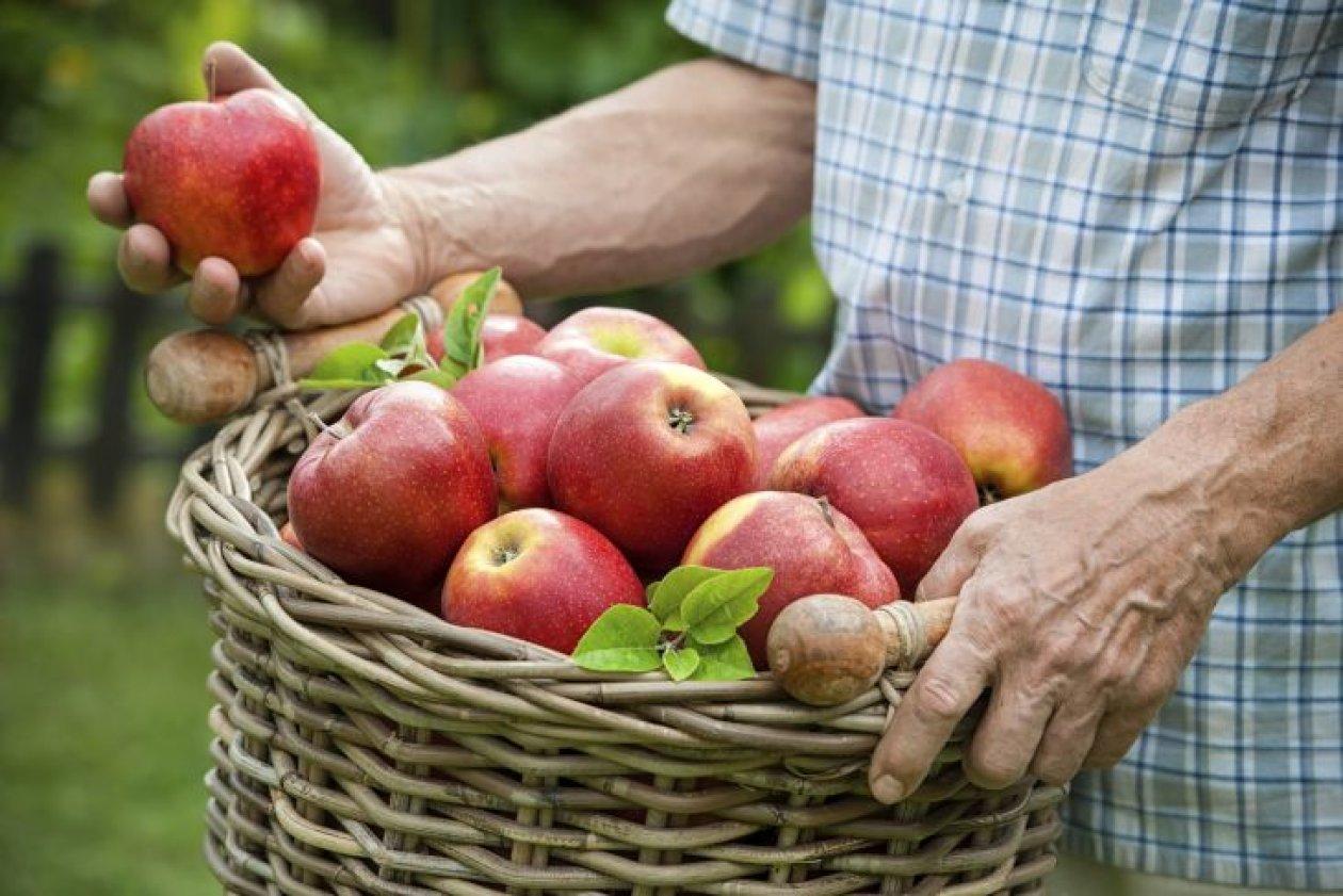 Eko poljoprivreda je doprinos generacijama koje dolaze