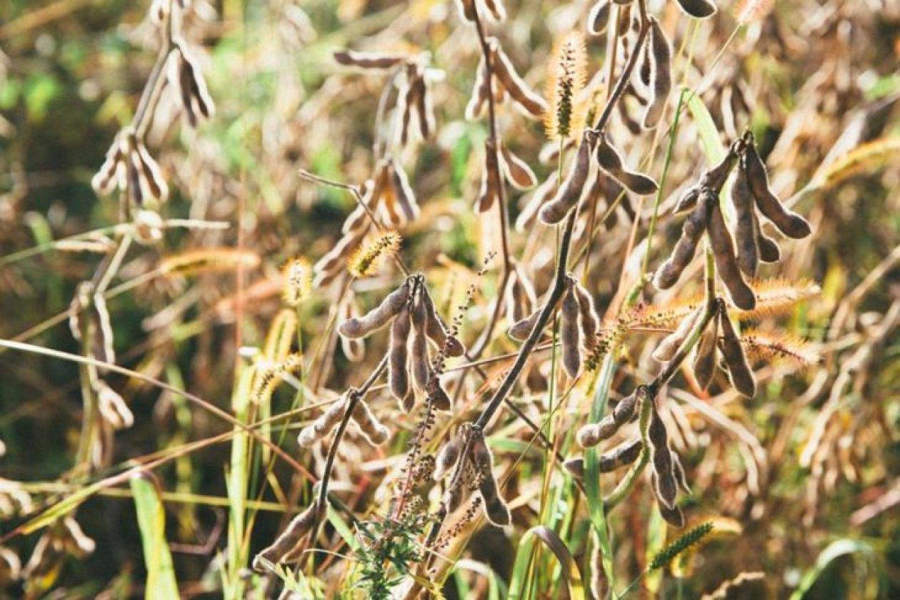 Fascinantan svijet mahunarki na Zrno eko imanju