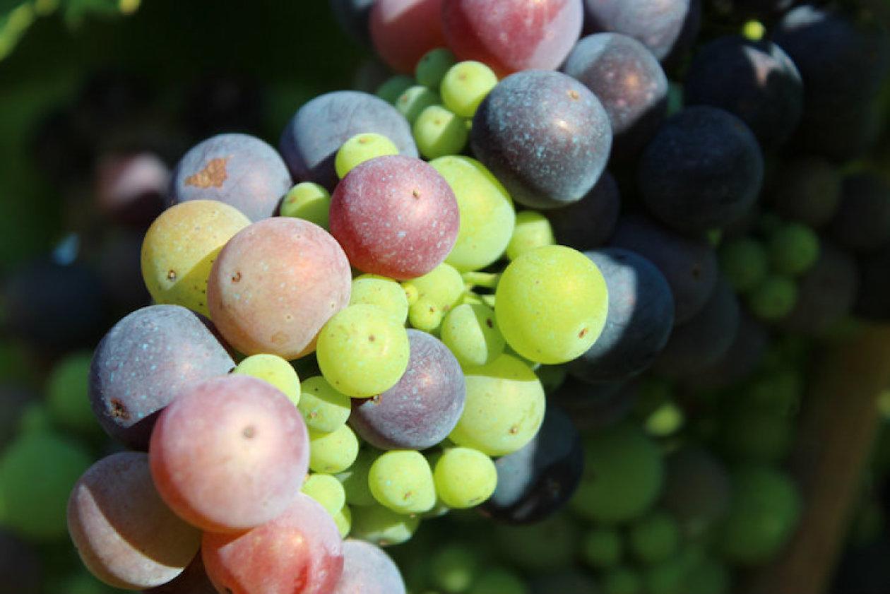 Roki's - HR eko vina s puno ljubavi