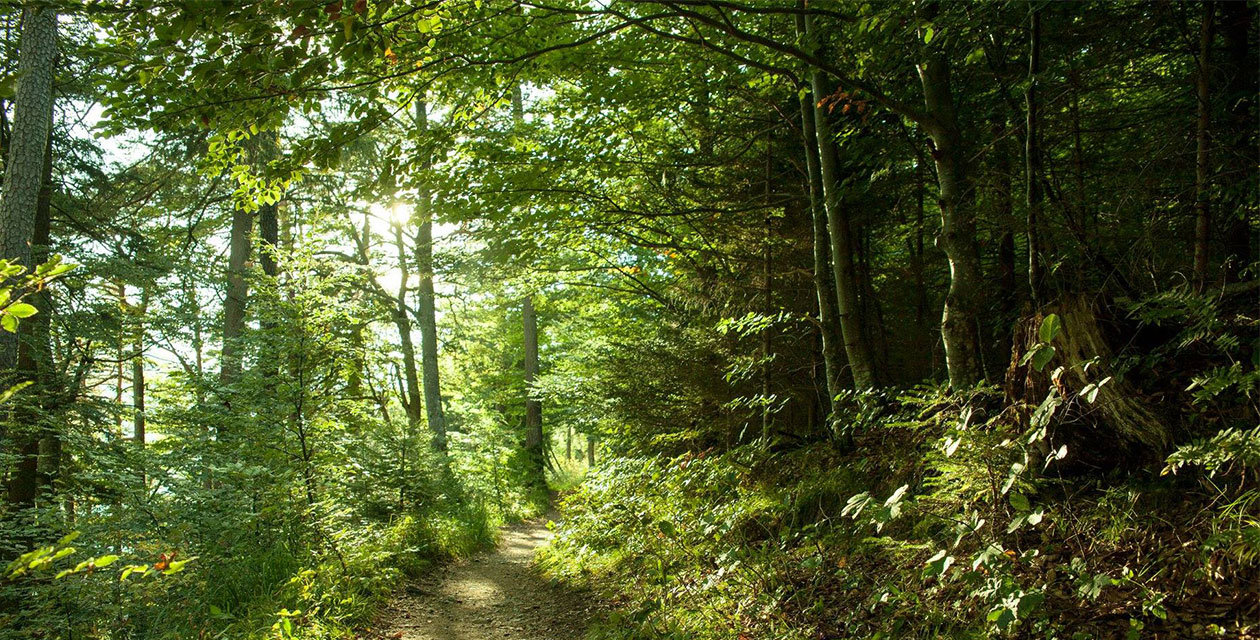 Šumska kupka – udahni mirise ljekovite šume